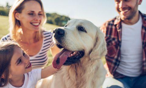 Suņa ienākšana ģimenē: padomos dalās kinologs Ivars Lielpēteris
