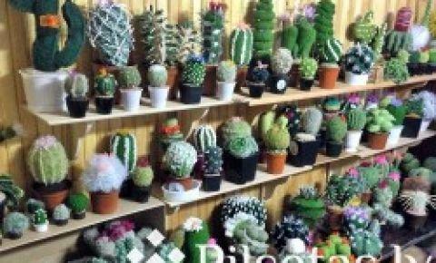 Kaktusu māja