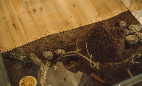 Iespējams pieteikties Dabas mājas organizētajām nodarbībām par skudrām
