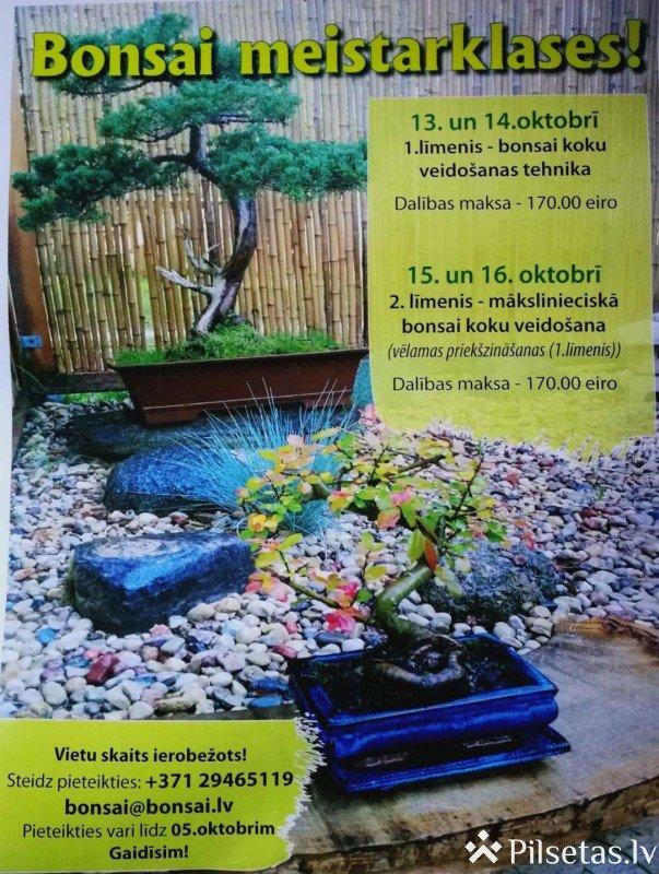 Baltic Bonsai park