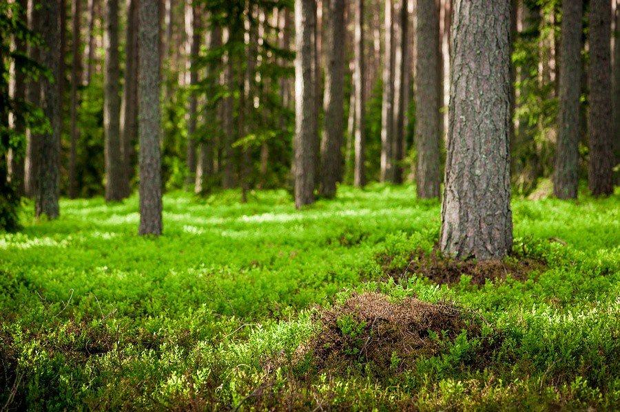 """Aicinām uz Meža dienām """"Zaļajā klasē""""!"""