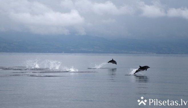 Rīdzinieki jautā: kāpēc Rīgas līcī ieradušies delfīni?